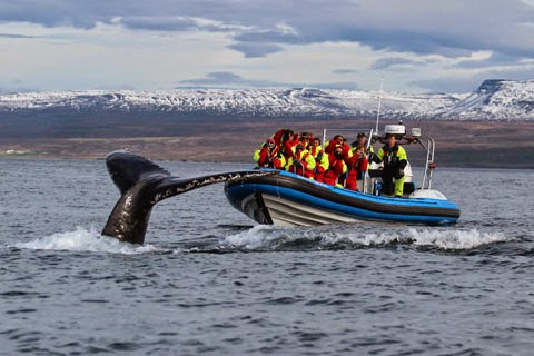 Húsavík Travel Guide: Whale Watching Capital of Iceland