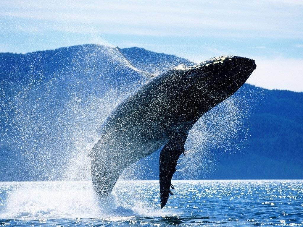 Whale watching in Reykjavik!