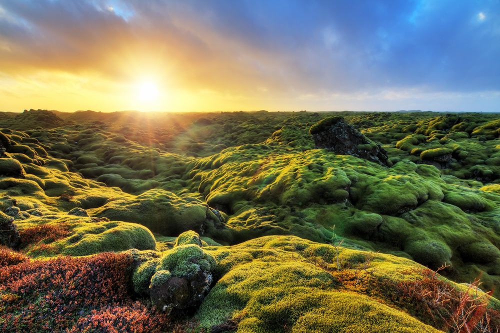 Green landscapes in Iceland